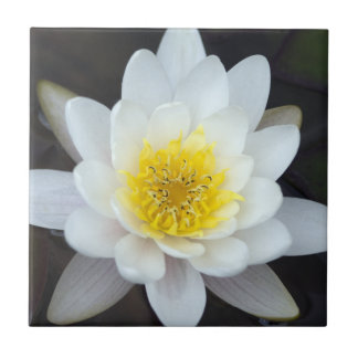 White Water Lily Tile