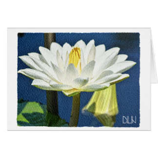 White Waterlily Flower/Floral  Art/ Card