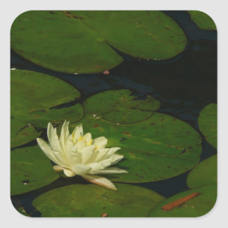 White Waterlily I Peaceful Floral Photography Square Sticker