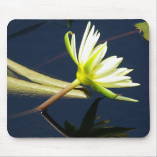 white waterlily mousepad