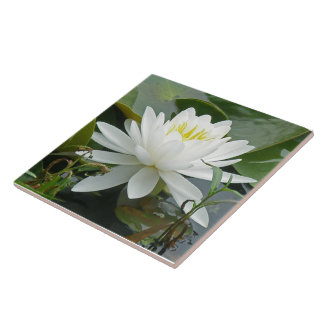 White Waterlily Wildflower Tile