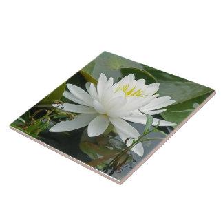 White Waterlily Wildflower Tiles