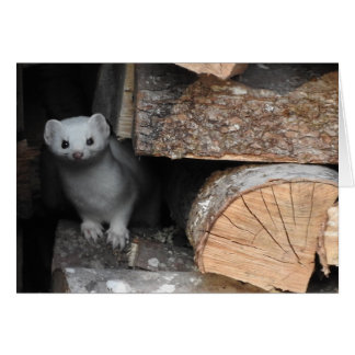 White Weasel Greeting Card, Blank Inside Card