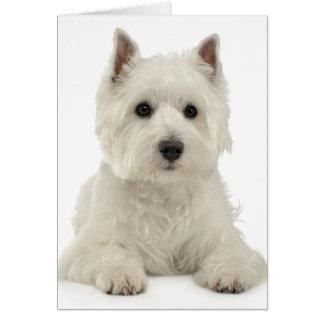 White West Highland Terrier Puppy Dog Westie Card