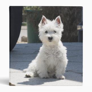 White West Highland Terrier Sitting on Sidewalk 3 Ring Binder