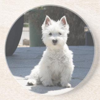 White West Highland Terrier Sitting on Sidewalk Coaster