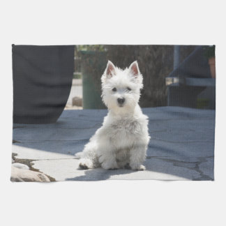 White West Highland Terrier Sitting on Sidewalk Kitchen Towel