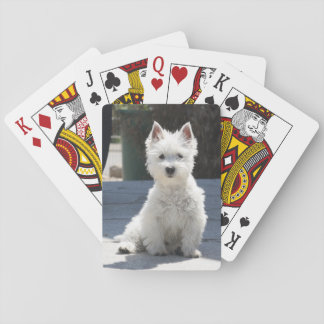 White West Highland Terrier Sitting on Sidewalk Playing Cards