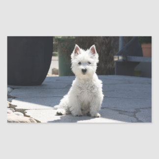 White West Highland Terrier Sitting on Sidewalk Sticker