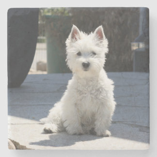 White West Highland Terrier Sitting on Sidewalk Stone Coaster