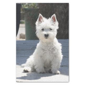 White West Highland Terrier Sitting on Sidewalk Tissue Paper