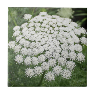 White Wild Flower Queen Anne's Lace Tile