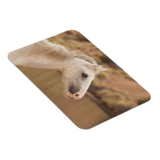 White wild horse magnet