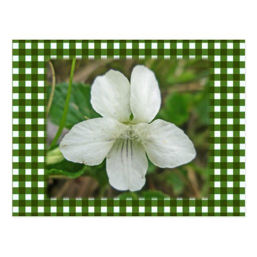 White Wild Violet Coordinating Items Postcards