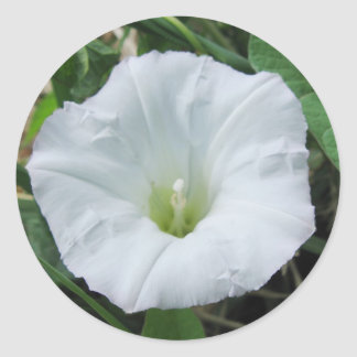 White Wildflower Sticker