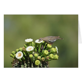 White-winged Dove Card