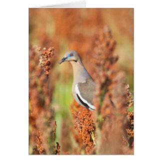 White-Winged Dove (Zenaida Asiatica) Perched Card