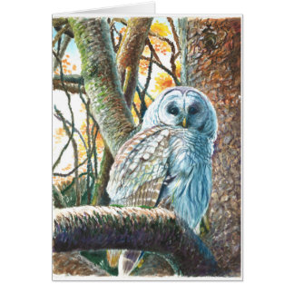 White Winter Owl in Vancouver B.C. Card