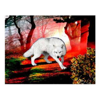 White wolf - arctic wolf - american wolf postcard