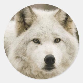 White Wolf round sticker