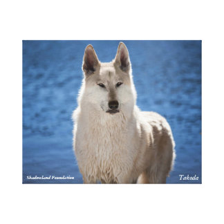 White Wolf Wrapped Canvas