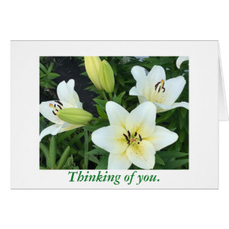 White Yellow Day Lilies Thinking of You Cards