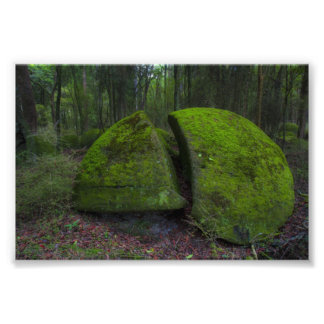 Whitecliff boulders - Forest Scene Photograph