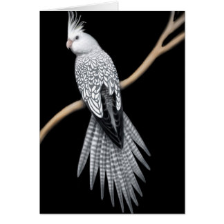 Whitefaced Pearl Pied Cockatiel Card