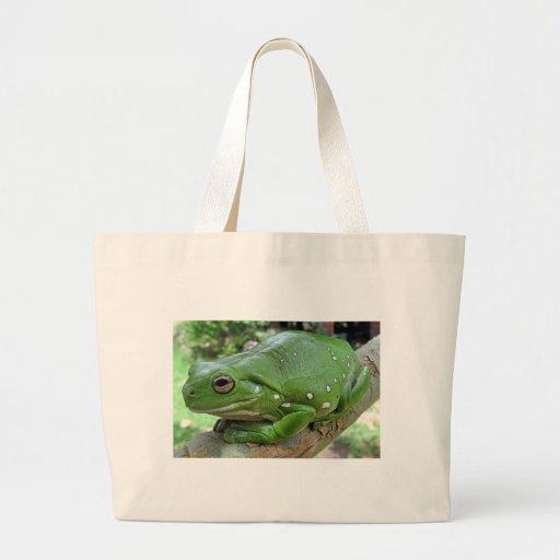 White's Tree Frog - Litoria caerulea Bag