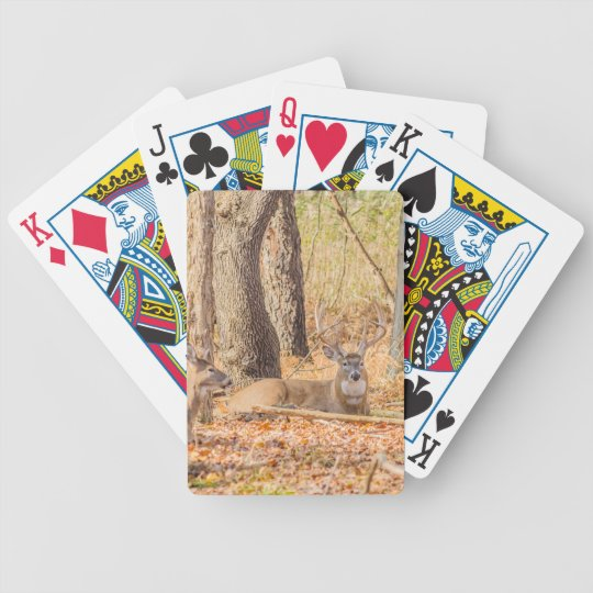 Whitetail Buck Bedded Poker Deck