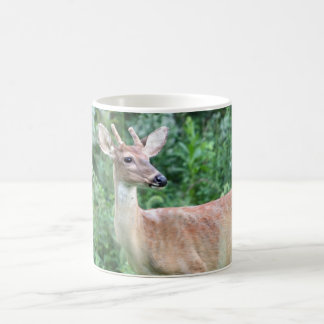 Whitetail Buck Coffee Mug