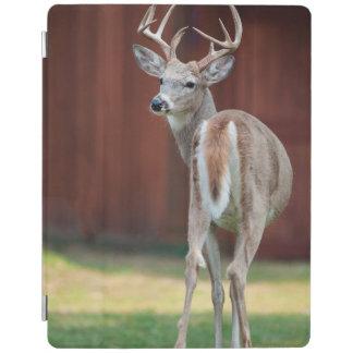 Whitetail Buck portrait, Missoula, Montana iPad Cover