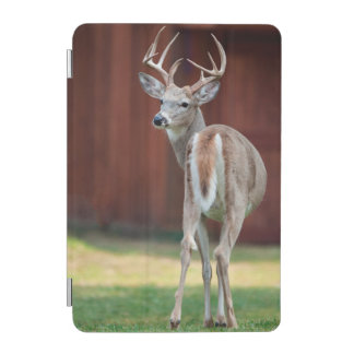 Whitetail Buck portrait, Missoula, Montana iPad Mini Cover