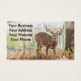 Whitetail deer buck business card