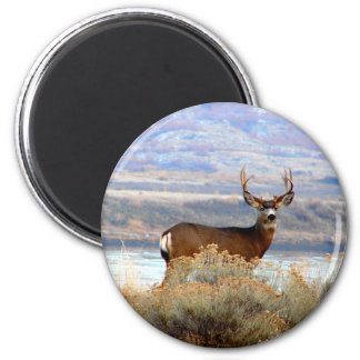 Whitetail Deer by Columbia River Magnet | Hunting