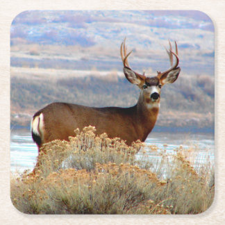 Whitetail Deer by Columbia River Paper Coaster