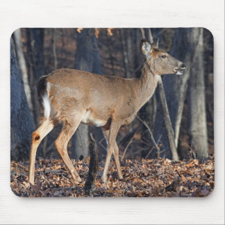 Whitetail Deer Eating Acorns At Sunrise Mouse Pad