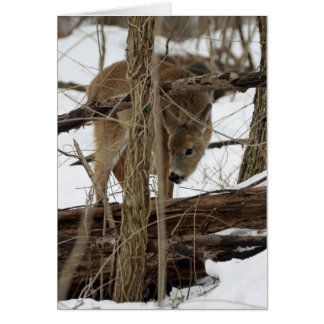 Whitetail Deer In Snow Card
