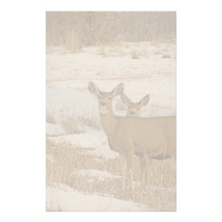Whitetail Deer Stationery