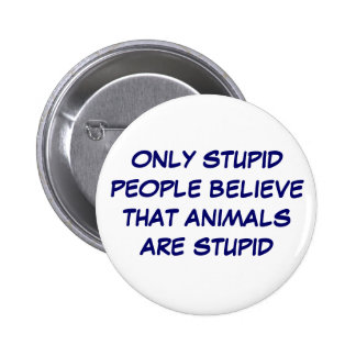 Who is stupid? buttons