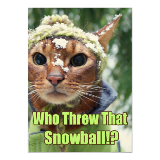 Who Threw That Snowball!? Flat Cards - Box of 10