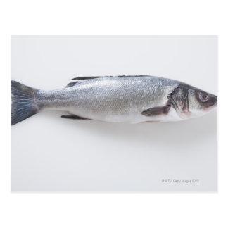 Whole branzini fish postcard