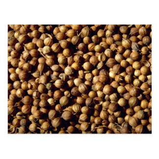 Whole coriander seeds postcard