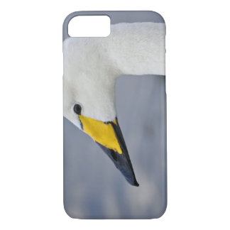 Whooper Swan at a pond in Reykjavik, Iceland. iPhone 7 Case