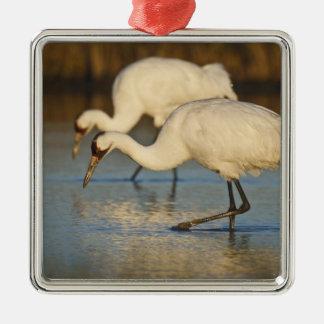 Whooping Crane wintering Metal Ornament