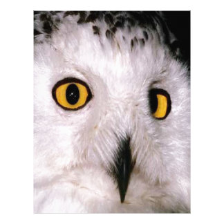 WHOOT OWL CUSTOM LETTERHEAD