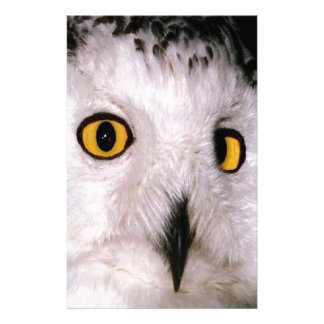 WHOOT OWL STATIONERY