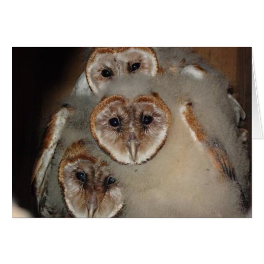 """""""Who's There?"""" Barn Owl greeting card"""