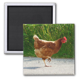 Why did the Chicken Cross the Road? Magnet