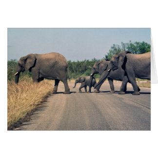 Why did the elephant cross the road? (1) card